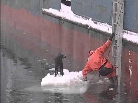 Russian Saves Dog At Sea