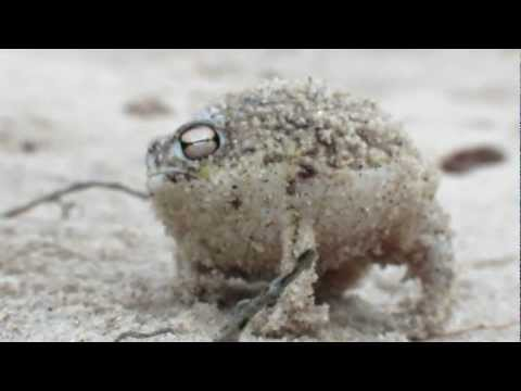 Cutest Rain Frog Ever