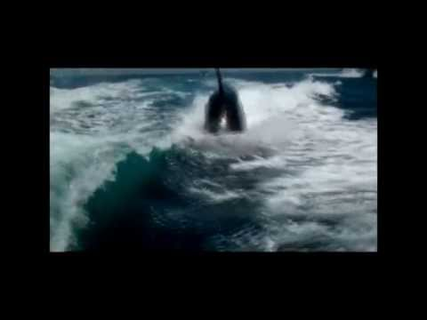 Boat Being Chased By Killer Whales