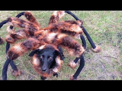 The Spider Dog Prank