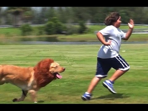 The Lion Dog Prank