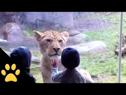 Zoo Animals And Kids