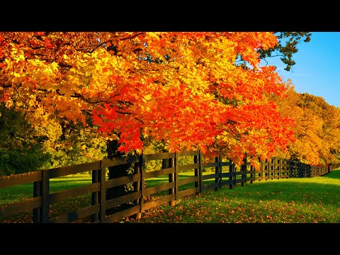 """Beautiful Relaxing Hymns, Peaceful Instrumental Music, """"October Autumn Morning Sunrise"""" By Tim Janis"""